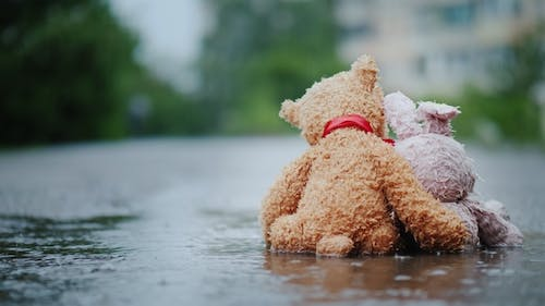 Faithful Friends - a Bunny and a Bear Cub Sit Side By Side on the Road, Wet Under the Pouring Rain