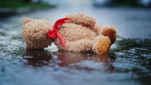 The Abandoned Little Bear Lies on a Wet Road, It's Raining. Loss and Depression Concept