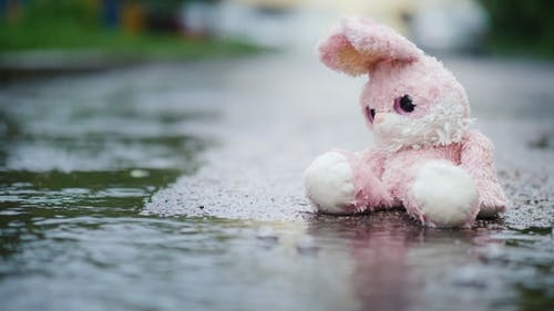 A Wet Toy Hare Becomes Wet Under the Rain. Sits Alone on the Cold Asphalt