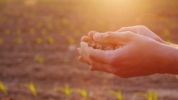 Cover Image for The Hands of a Farmer with Fertile Land. Organic Farming Concept