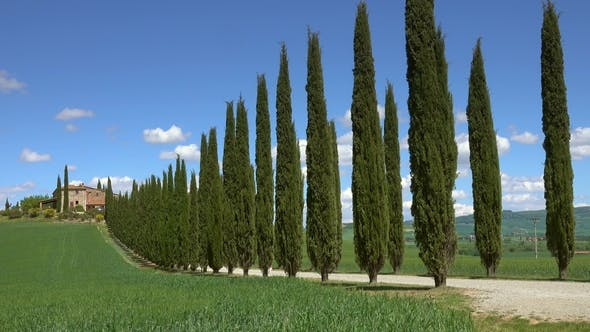 Tuscany Farmhouse and Cypresses at Sunny Day