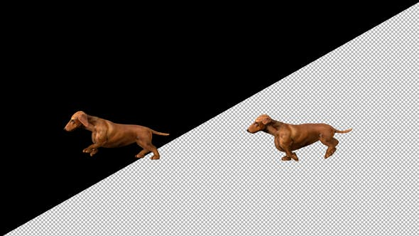 Thumbnail for Dachshund Walk
