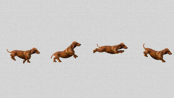 Thumbnail for Dachshund Run and Jump