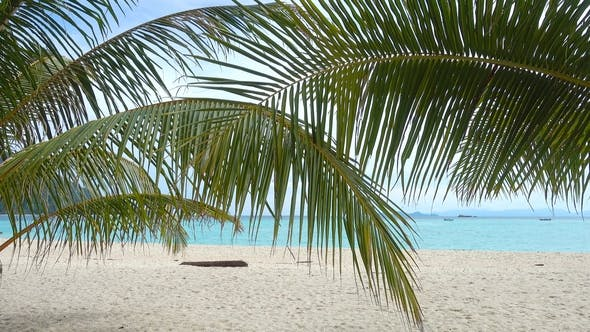 Thumbnail for Palm Leaves and White Sand Tropical Beach
