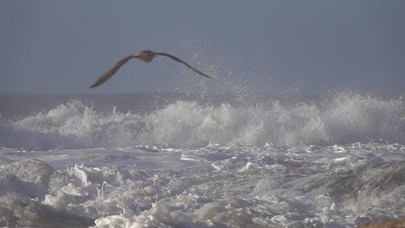 Thumbnail for Atlantic Ocean Big Waves over Cliffs