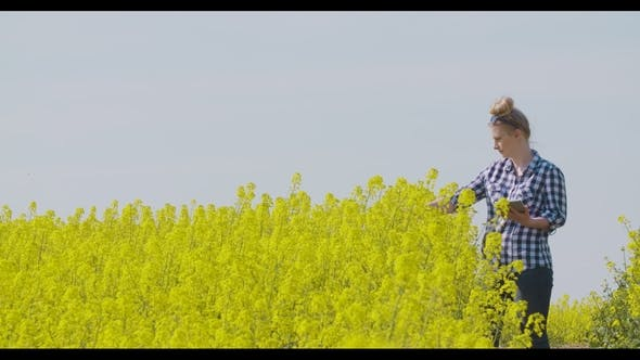 Thumbnail for Farmer Examining Rapeseed Blooming Plants