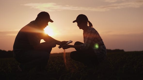 Thumbnail for Two Farmer Man and Woman Are Working in the Field. They Study Plant Shoots, Use a Tablet. At Sunset