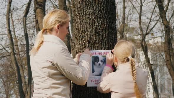 Thumbnail for A Woman with a Child Attaches a Poster with Information About the Missing Dog
