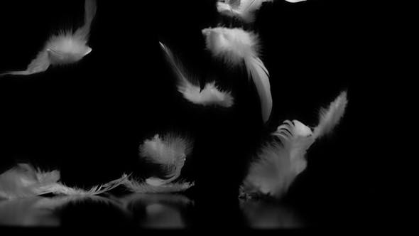 Thumbnail for White Feathers Falling Against Black Background with Reflection