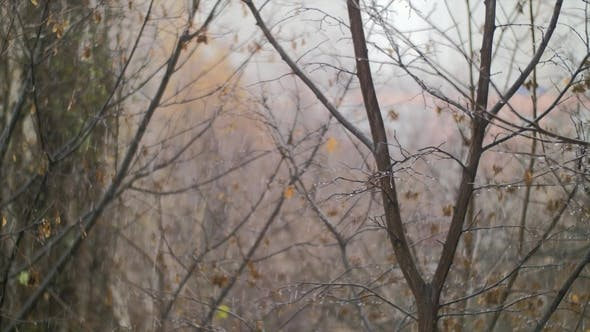 Thumbnail for Dull Autumn Scene of Bare Trees and Snow with Rain