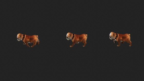 Thumbnail for Bulldog Walk Top