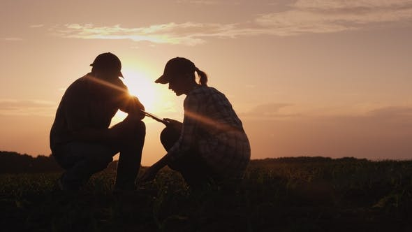 Thumbnail for Silhouettes of Two Farmers - Men and Women. Work in the Field at Sunset, Study Plant Shoots, Use a