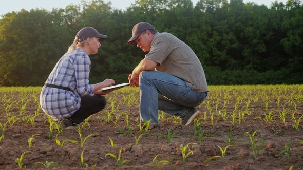 Thumbnail for A Man and a Woman Work in the Field. They Look at the Green Shoots, Use the Tablet. Against the
