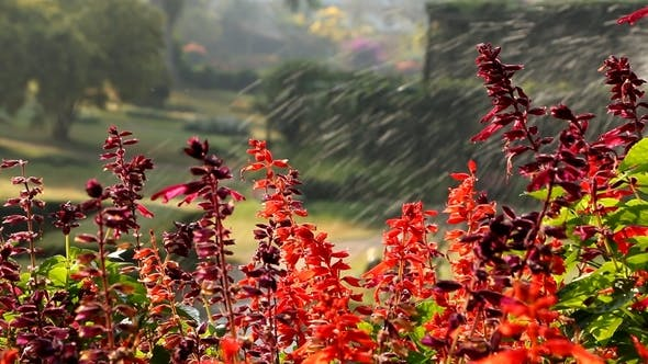Thumbnail for Garden Water Sprinkler And Flowers 1077