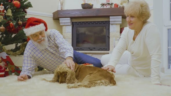 Thumbnail for Mature Woman with Husband Stroking Dog Sitting on Floor Near Christmas Tree
