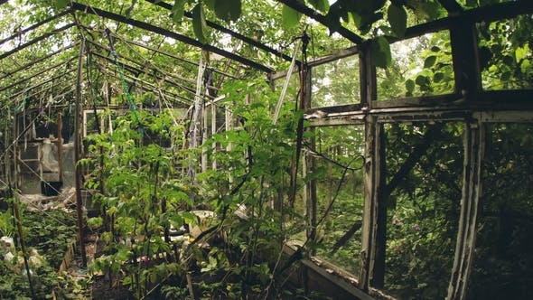 Abandoned Old Greenhouse