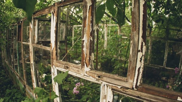 Thumbnail for Frame of Abandoned Old Greenhouse