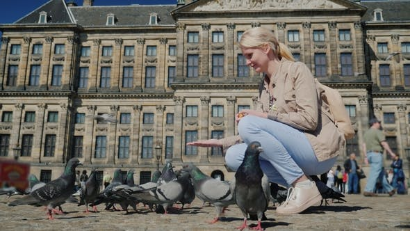 Thumbnail for The Tourist Feeds Pigeons in the Center of Amsterdam in the Background of the Royal Palace. Travel