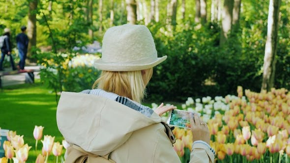 Thumbnail for The Tourist Makes a Photo of the Flower Beds of a Tulip in a Park of Flowers