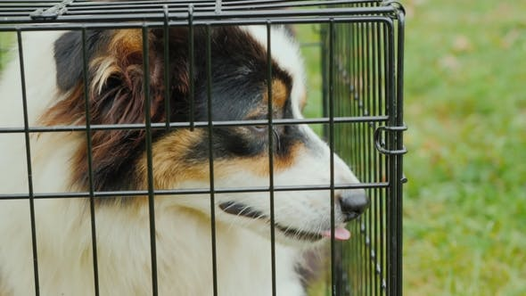 Thumbnail for A Dog with Sad Eyes Sits in a Cage. Shelter for Animals