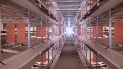 Poultry Farm Farming Business