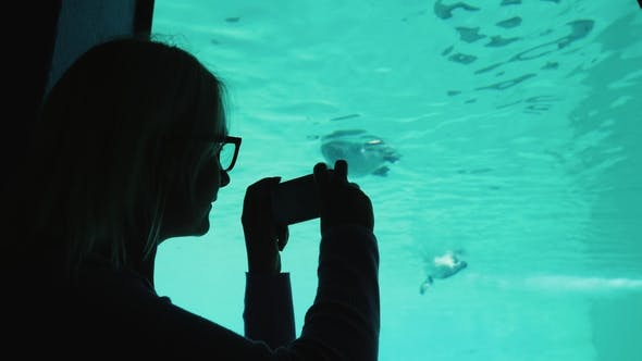 Thumbnail for A Visitor To the Zoo Takes Pictures of the Underwater Inhabitants Through the Transparent Wall