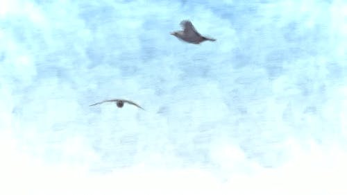 Birds Flying in the Blue Sky Stop Motion
