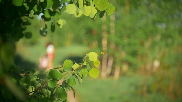 Thumbnail for Tree Branches in the Wind, Background of Young Girls Riding Bicycles, Blurred, Green Forest, Summer