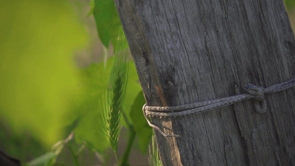 Thumbnail for Old Wooden Log on the Vineyard