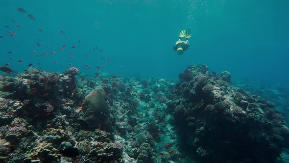 Thumbnail for Free Diver Exploring Coral Reef in Sea