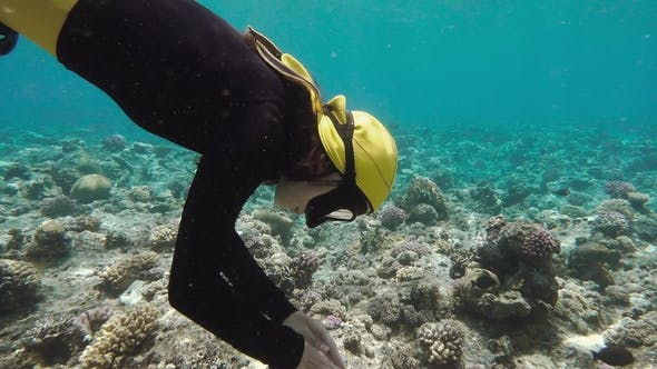 Thumbnail for Pretty Free Diver Exploring Coral Reef