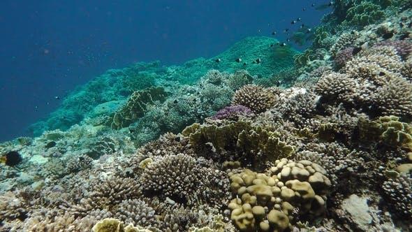 Thumbnail for Wonderful Underwater World
