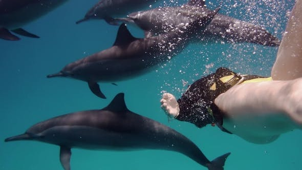 Thumbnail for Freediver Woman Together with Dolphins in the Sea