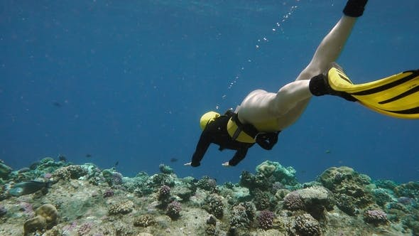 Thumbnail for Young Free Diver Exploring Coral Reef in Sea
