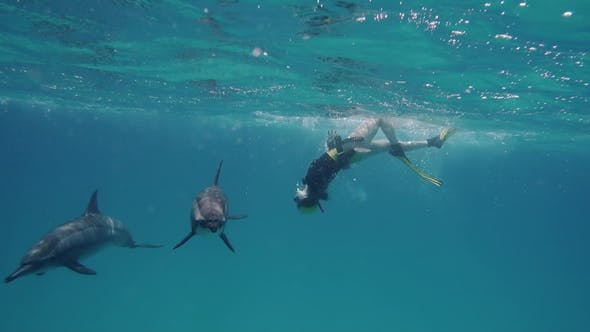 Thumbnail for Freediver Woman with Dolphins in the Sea
