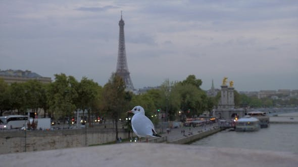 Thumbnail for Gull Against Evening Paris. View with Eiffel Tower and Waterfront, France