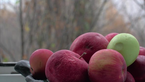 Thumbnail for Old Apples in Bowl and Late Autumn Outside