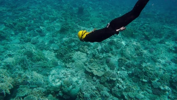 Thumbnail for Woman Free Diving On a Beautiful Coral Reef