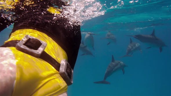 Thumbnail for A Freediver Girl Swims with Free Dolphins in Sea