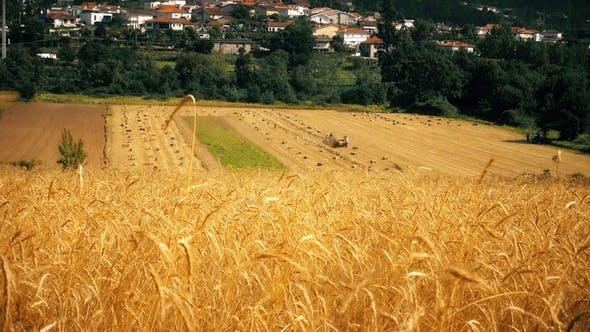 Thumbnail for Wheat Field 4K