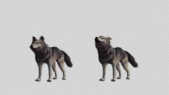 Realistic Wolf Howl
