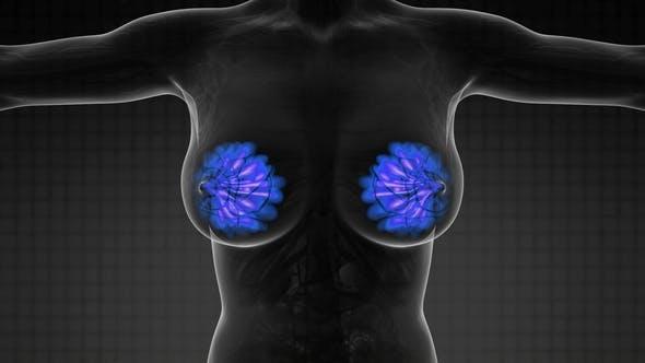 Thumbnail for Menschlicher Körper mit sichtbarer Glow Brustdrüse