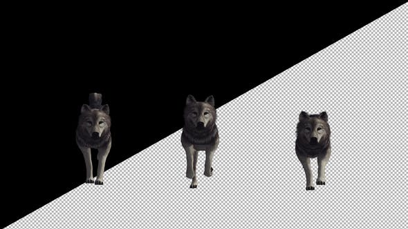 Thumbnail for Wolf Run