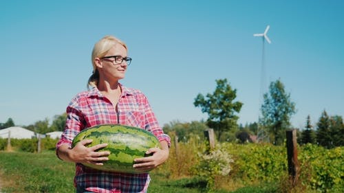 An Attractive Woman Farmer Walks Along the Field Carrying a Large Watermelon. Rural Life and Good