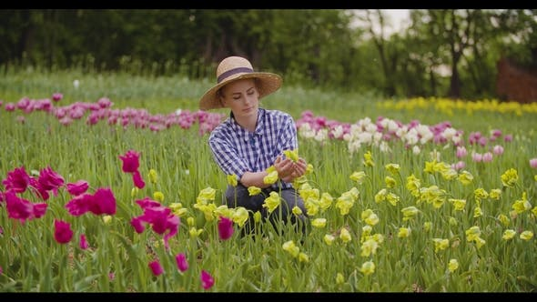 Thumbnail for Female Farmer Examining Pink Tulip Flowers At Field