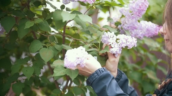 Cover Image for Girl, Breaks Off a Sprig of Lilac and Sniffs, Summer Day