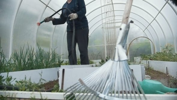 Cover Image for Grandmother in a Greenhouse Watering Seedlings, Summer Day,