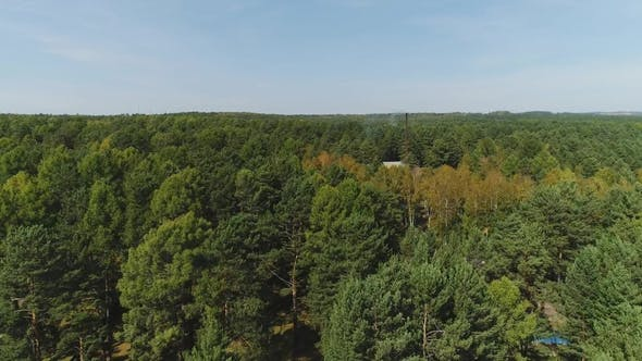 Thumbnail for House in Autumn Forest, Shot By Drone. Concept: Forest Trees, Private House, Nature Landscape