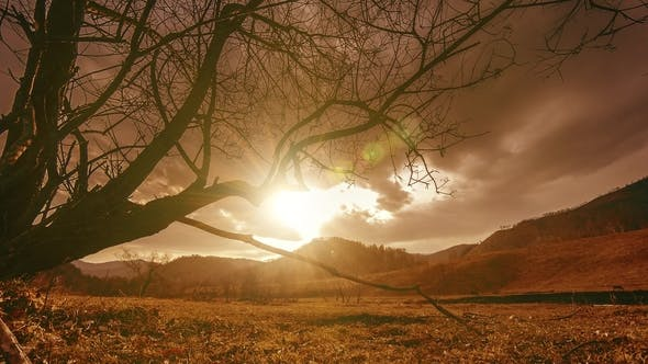 Thumbnail for of Death Tree and Dry Yellow Grass at Mountian Landscape with Clouds and Sun Rays. Horizontal