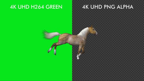 Horse Passing Screen - Palomino - 4K